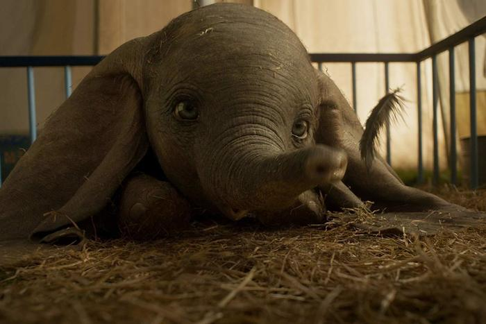 Dumbo (2019) imagen 1