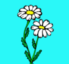 Dibujo Margaritas pintado por tatiana