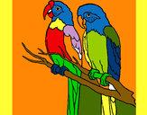 Dibujo Loros pintado por JOAKINN