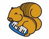 Ardilla pianista