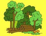 Bosque 2