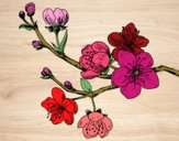 Dibujo Rama de cerezo pintado por blanca