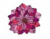 Flor de dalia