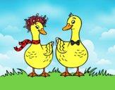 Pareja de patos