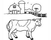 Vaca pasturando