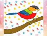 Pájarito 1