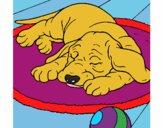 Dibujo Perro durmiendo pintado por dariannis