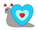 Caracol corazón