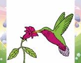 Colibrí y una flor