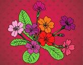 Dibujo Primula pintado por amalia