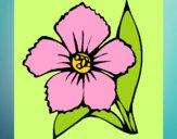 Dibujo Flor 4a pintado por priva