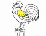 Gallo cantando