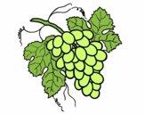 Dibujo Racimo de uvas pintado por kjdfshiudf
