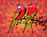 Pareja de pájaros