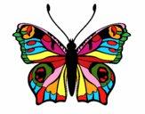 Mariposa 20