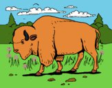Dibujo Búfalo  pintado por LunaLunita