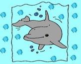 Delfín 2