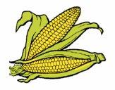 Mazorca de maíz