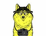 Perro fotógrafo