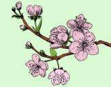 Dibujo Rama de cerezo pintado por hasiel