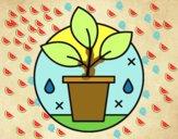 Dibujo Cultivo Ecológico pintado por RUBI45