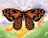 Mariposa alexandra