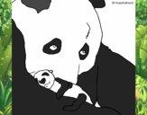 Oso panda con su cria