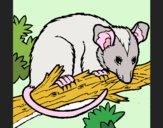Dibujo Ardilla possum pintado por SHEERAN