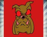 Bull dog II