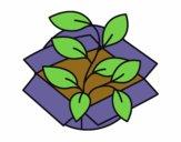 Planta ecològica
