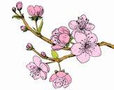 Dibujo Rama de cerezo pintado por Pillina