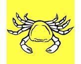 Cangrejo de mar 1