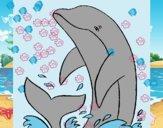 Delfín chapoteando