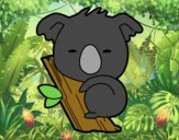 Koala bebé