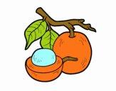 Fruta exótica ximenia