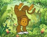 Mono equilibrista