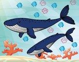 Dibujo Ballenas pintado por jhonalex