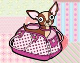 Dibujo Chihuahua de viaje pintado por lauracv