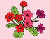 Dibujo Primula pintado por esthefani2