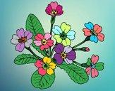 Dibujo Primula pintado por fakita