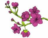 Dibujo Rama de cerezo pintado por vicky2004