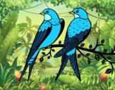 Dibujo Pareja de pájaros pintado por leudelis