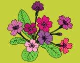Dibujo Primula pintado por olgablanco