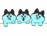 3 perritos