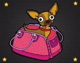 Dibujo Chihuahua de viaje pintado por karen25
