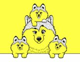Dibujo Familia Husky pintado por Gobasa