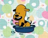 Un perrito en la bañera