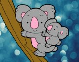 Madre koala