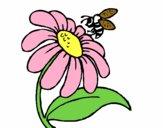 Margarita con abeja