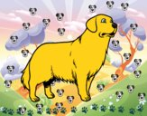 Dibujo Perro Golden retriever pintado por emirena